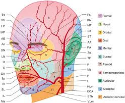 arteries of the face arteries of the face and neck plastic surgery key