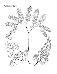 coloring pages fern coloring pages