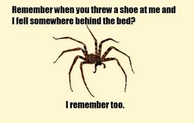 ITT: Misunderstood Spider meme - Page 2 - Bodybuilding.com Forums via Relatably.com