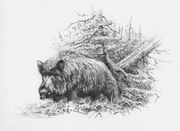 Wildboar Ink On Paper 17 X 24 Cm Wildlife Art Pinterest