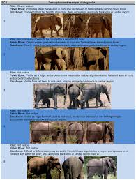 Body Condition Scoring Index For Female African Elephants