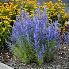 a starter list of plants for the gardener who doesn t like to water