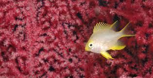 Dive Fiji Marine Life Dive Magazine