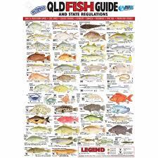 Fish Size Chart Fish Size Chart Qld Buurtsite Net
