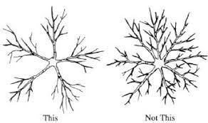 Chapter 4 How To Prune Fruit Tree RootsPrune Fruit Tree