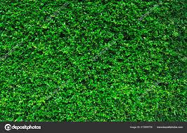 Natuurlijke Groene Bladeren Achtergrond Natuur Behang Eco Muur Zomer