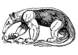 Small Picture Coloring page anteater img 13712