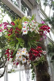 the 13th annual the orchid show at nybg showcases so many diffe varieties of orchids and is a must see this spring the show continues through april 19