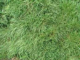 wild grass texture. Plain Texture Wild Grass Texture L Nongzico  Colorful   Throughout A