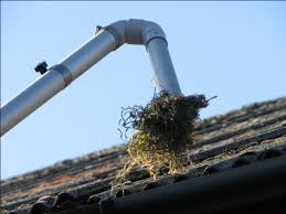 Gutter Cleaning | DrainBoss Plumbing & Drainage Services