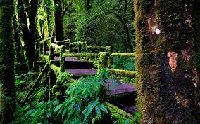 free rainforest wallpaper