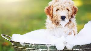 Puppy Wassen 8 Weken