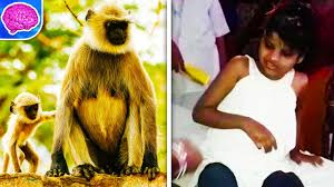 real jungle animals monkeys. Fine Animals Real Life Jungle Book Girl Found Living Among Monkeys In India Animals