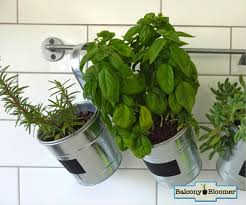 Balcony Bloomer Hanging Herb Planters #justaddwater #growyourown