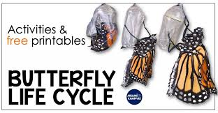 Butterfly Life Cycle Resources & Free Printables - Around the Kampfire