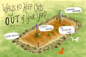 how to keep cats out of garden. Delighful Keep Intended How To Keep Cats Out Of Garden