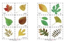 Fall Leaf Chart Fall Leaf Preschool Printables Preschool Mom