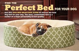 pare Drs Foster and Smith Dog Beds