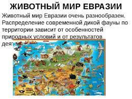 Презентация по окружающему миру на тему Евразия класс  ЖИВОТНЫЙ МИР ЕВРАЗИИ Животный мир Евразии очень разнообразен Распределение с
