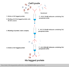 Protein Purification Chart G Bond Ni Ida Agarose Bead Gcc Biotech I Pvt Ltd