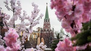 Bunga Sakura Bunga Sakura Dalam Budaya Dan Diplomasi Jepang Uzone