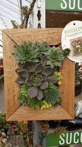 denver garden centers. Succulent Wall Planter.jpg (superior Garden Centers Denver #2) N