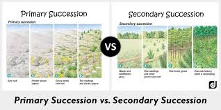 Primary Succession And Secondary Succession Venn Diagram 63 Proper Flow Chart Primary Succession And Secondary Succession