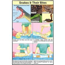 Snakes And Their Bites Chart India Snakes And Their Bites