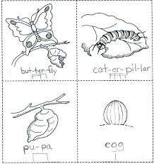 coloring pages moon phases elegant erfly life cycle coloring pages erfly color page erfly of coloring