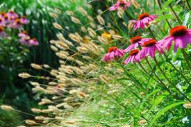 Small Picture 1305 best Beplanting images on Pinterest Ornamental grasses