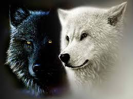 black wolf and white wolf love. Contemporary White The Cherokee Legend Of The Two Wolves For Depression And Black Wolf White Love C