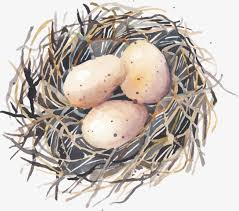 bird eggs clipart.  Bird Hand Painted Bird Eggs Bird Clipart Egg Hand PNG Image And Clipart With Eggs T