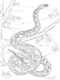 Small Picture Racer Snake coloring pages Free Coloring Pages