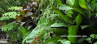 Small Picture Tropical garden design