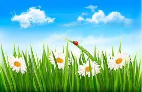 grass and flowers background. Beautiful Flowers Nature Background With Green Grass Flowers  U0026 Plants In Grass And GraphicRiver