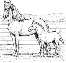 Free Mare And Foal Horse Coloring Pages Everything Horse And Pony