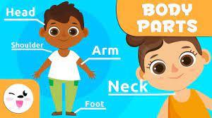 Parts of body Học các bộ phận cơ thể bằng tiếng anh với bé | Tiếng anh,  Thân thể, Từ vựng