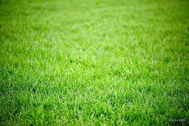 grass field background. Green Grass Field Background By Naturalis A
