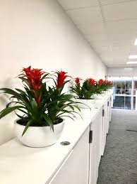 modern office plants. Modern Office Plants. Inleaf Charlotte On Twitter: \\ Plants I M