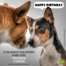Dog Best Friend Quotes Beauteous Cracking Birthday Jokes Huge List Of Funny MessagesWishes