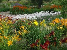 Perennials Come Back To Your Garden Year After Year Bringing Reliable Color And Form Landscape Here Are Some Basic Tips For Laying Out A Perennial