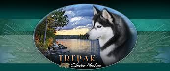wele trepak siberian huskies