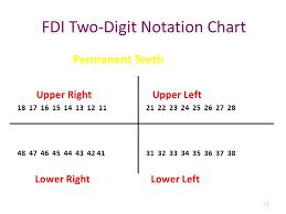 Fdi Notation Charting Teeth Types Formula Eruption Ppt Video Online Download