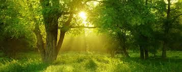 Theme Eco Friendly Natural Environment