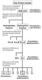 Screening Chart Of Lipid Lowering Di Peptides From Soy