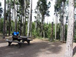 Grant Village Campground (Parc national de Yellowstone, Wyoming) - tarifs  2020 mis à jour et avis camping - Tripadvisor