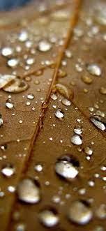nj07-leaf-rain-water-drop-bokeh-nature ...
