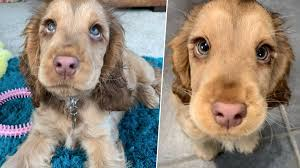 An official synopsis for the book reads. Puppy With Disney Character Eyes Goes Viral As People Swoon Over Her Long Lashes Heart