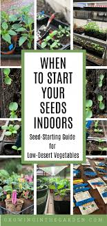 when to start seeds indoors a seed