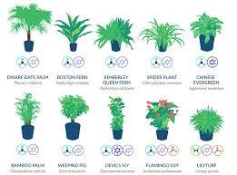 best air filtering houseplants nasa 3